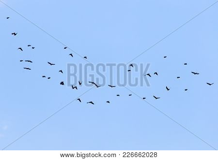 Bird Flying In The Sky . In The Park In Nature