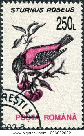 Romania - Circa 1993: A Stamp Printed In The Romania, Shows The Rosy Starling (sturnus Roseus), Circ