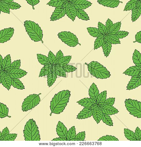Tea Collection.vector Hand Drawn Seamless Pattern With Green Peppermint
