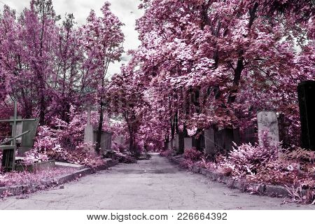 Cemetery Background In Infrared Color, Moldova, Chisinau