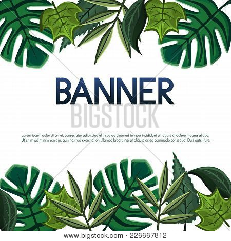 Vector Banner, Poster, Invitation Card Design With Tropical And Simple Leaves.