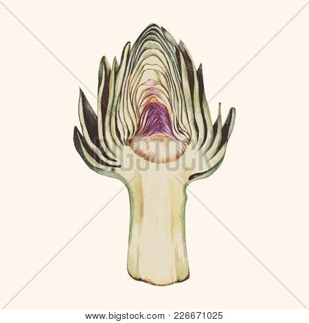Illustration of artichoke
