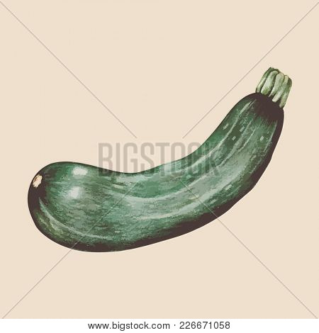 Illustration of drawing vegetable