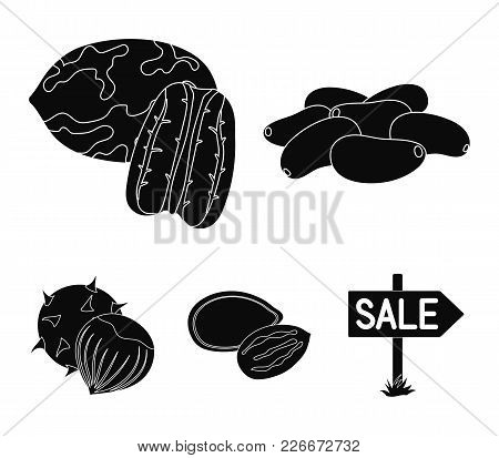 Pecan, Pine Nut, Pumpkin Seeds, Chestnut.different Kinds Of Nuts Set Collection Icons In Black Style