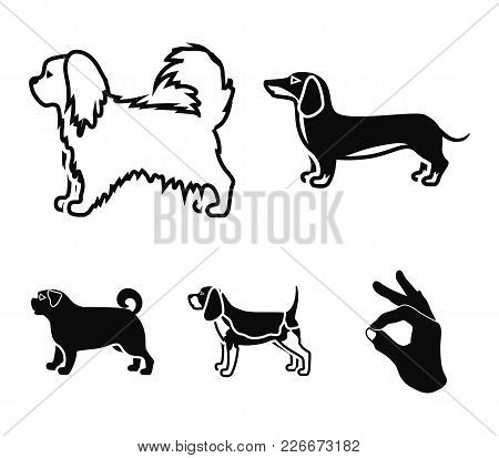 Pikinise, Dachshund, Pug, Peggy. Dog Breeds Set Collection Icons In Black Style Vector Symbol Stock