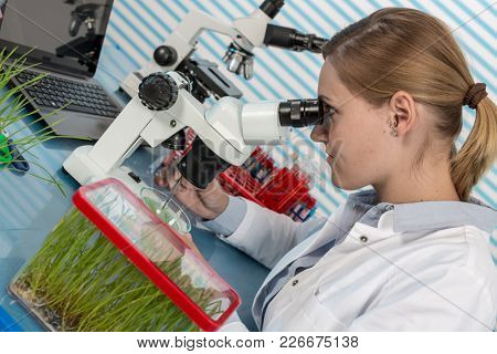 scientist with green plant in modern laboratory. woman study of genetic modified GMO plants in the laboratory
