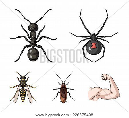 Spider, Ant, Wasp, Bee .insects Set Collection Icons In Cartoon Style Vector Symbol Stock Illustrati