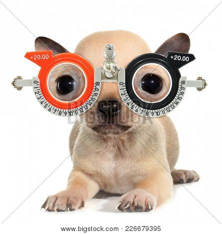 Crazy cute puppy with ophthalmology glasses