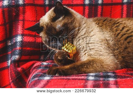 Siamese Thai Cat On A Red Plaid With Christmas Toys, Decor, Ornaments. A Cat Is Playing With Toys