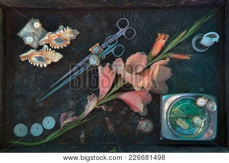 Art Still Life With A Huge Pink Gladiolus Flower, Two Pairs Of Thin Long Scissors, Sea Shells And Di
