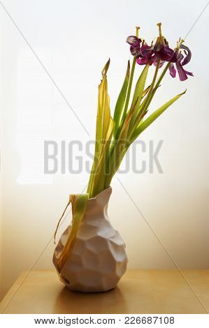 Lilac Flower In A White Vase Wilted