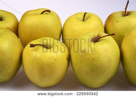 Large Yellow Fresh Apples In Two Rows Close Up On A White Background.