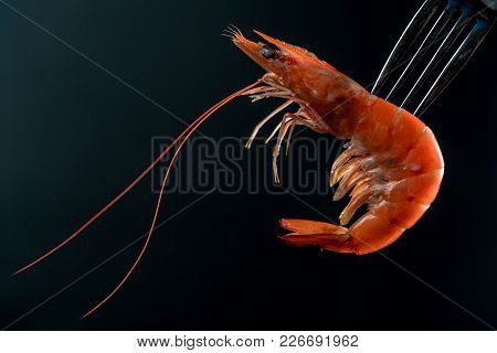 Steamed Shrimp On Fork Isolated On Dark Background With Copy Space. Seafood Buffet In Restaurant Con