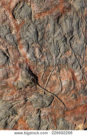 Fossils On Rock