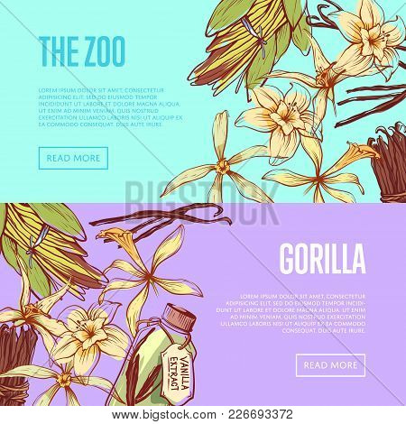 Vanilla Spice Flyers Set With Space For Text. Exotic Spice For Food Or Parfum Industry Vector Illust