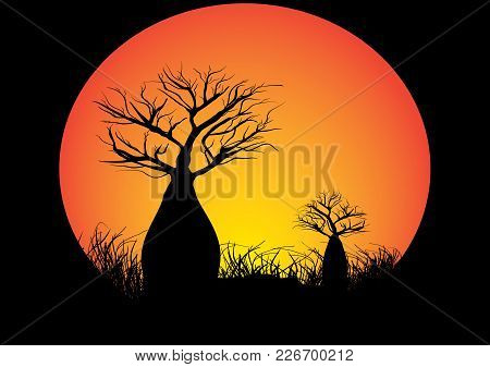 Two Boab Trees In A Circle Black Background