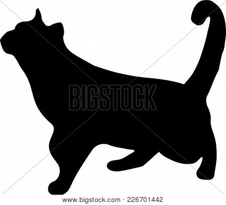 Black Silhouette Of Cat Watching Up Isolated On White Background. Vector Illustration, Icon, Clip Ar