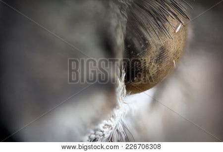Detail Of Eye Of Moth Macro Or Micro Photography
