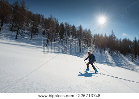 Ski De Randonnée. Woman With Seal Skins And Ski Mountaineering