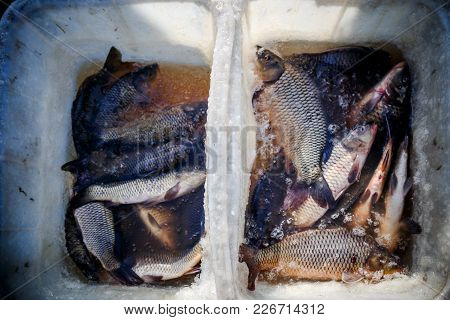 Live Fish-carp Is Sold On The Street In A Box With Water