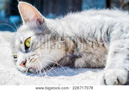 Young Cat With Green Eyes Is Lying In Sun And Posing To Camera. Cute Cat. Cat Girl. Beautiful Cat Ey