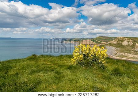 View From The South West Coast Path Over The Jurassic Coast, Near Worth Matravers, Jurassic Coast, D