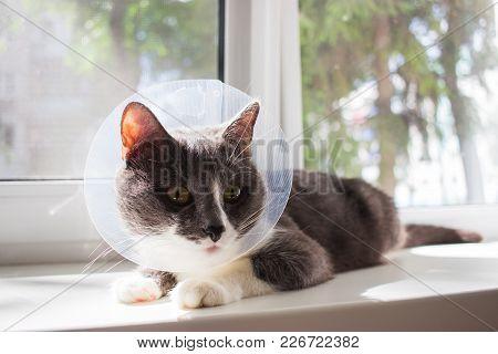 Pathetic Quarantine Sick Grey Cat Transparent E-collar Patient Window