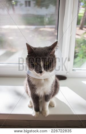Quarantine Summer Cute Grey Cat Transparent E-collar Patient.