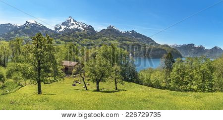 Swiss Landscape With Mountains And Meadows - Spring Landscape With Green Meadows, Cows, A Stable Bet