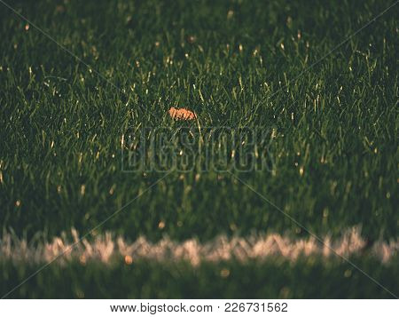 White Line Marks Painted On Artificial Green Turf Background. Playfield Border. Winter Football Play