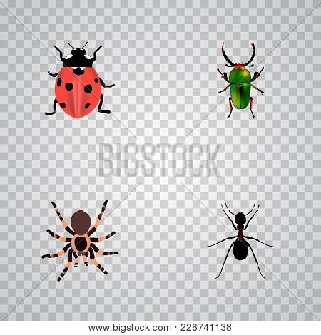 Set Of Bug Realistic Symbols With Ladybug, Beetle, Black Widow And Other Icons For Your Web Mobile A