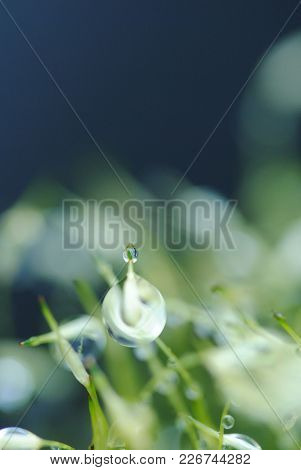 Macro close-ups of droplets on plants in a greeny garden