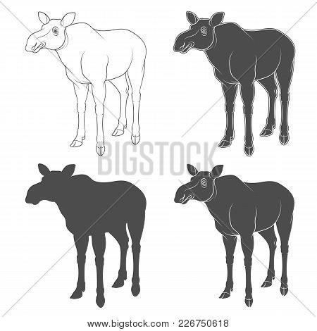 Set Of Black And White Images With A Moose. Isolated Objects On White Background.