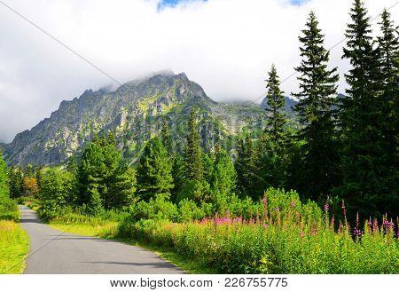 Summer mountain landscape. Hiking trail in Mengusovska Valley, Vysoke Tatry (High Tatras), Slovakia