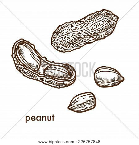 Ripe Whole And Peeled Peanut In Shell Set. Delicious Small Nut In Oblong Shells. Ingredient For Swee
