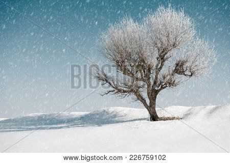one tree in winter, blue sky with snow on background, beautiful wild landscape, nature concept