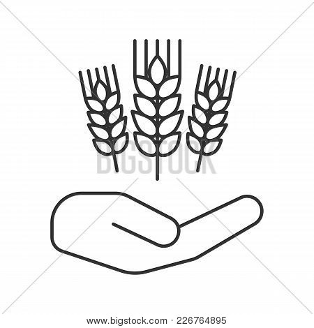 Open Hand With Wheat Ears Linear Icon. Farming. Agriculture. Thin Line Illustration. Growing Wheat.