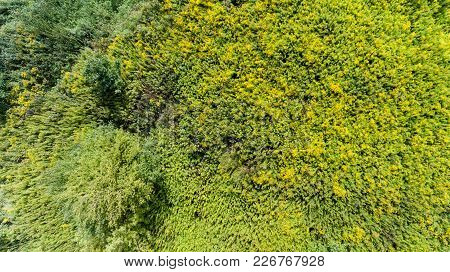 Green Grass Summer Meadow Bush Top View From Above