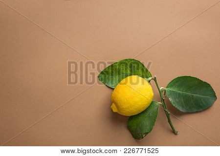 Bright Yellow Ripe Organic Lemon On Branch With Green Leaves On Beige Brown Background. Visible Impe