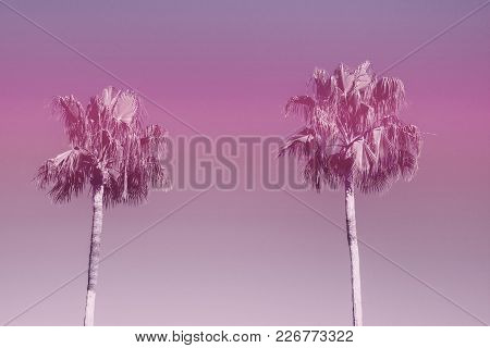 Two Palm Trees On Toned Ultraviolet Sky Background Trendy 2018 Color. Surrealistic Vintage Style Cop