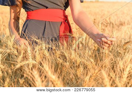 Womens Hands With Spikes In The Field Of Wheat. Gold Spikes Under The Sky
