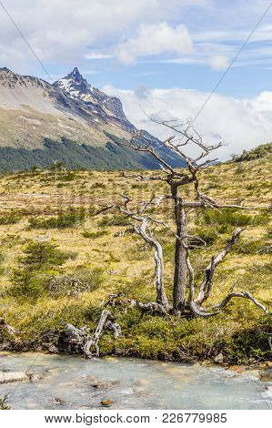 Stream And Dry Tree In Laguna Esmeralda Trail With  Mountains And Vegetation