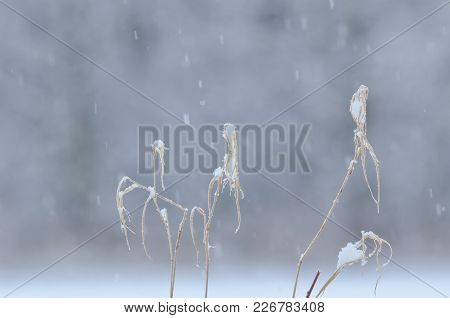 Winter - Dry Grass On The Background Of The Forest