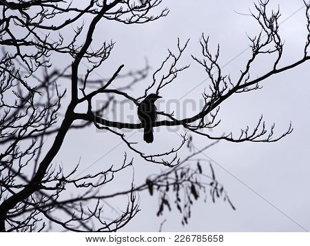 A Single Crow Perched In The Branches Of A Winter Tree In Silhouette
