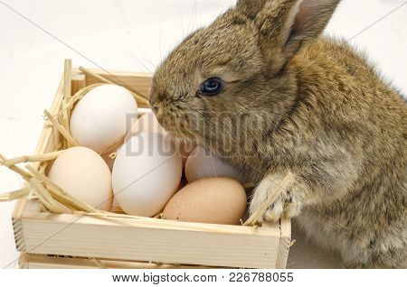 Cute little easter bunny with wooden box full of easter eggs on gray background.  Easter bunny with Easter eggs in wooden box. Little Easter bunnies with easter eggs. Easter bunny concept. Easter bunny egg hunt. Farm bunnies. Easter Bunny card. Ginger rab