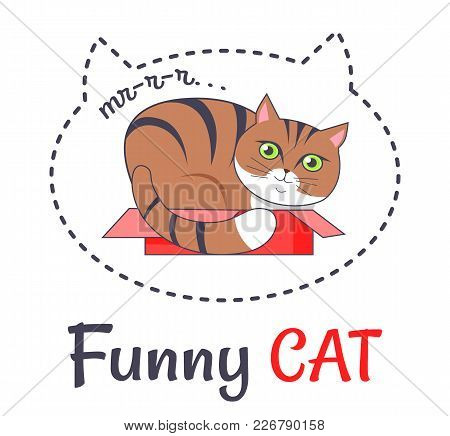 Funny Brown Cat Sleeping In Open Red Box And Makes Sound Murr Vector Illustration Dedicated To Cats