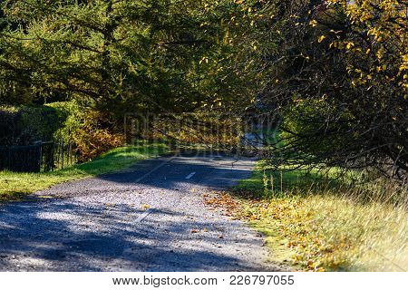 Romantic Gravel Road In Green Tree Forest
