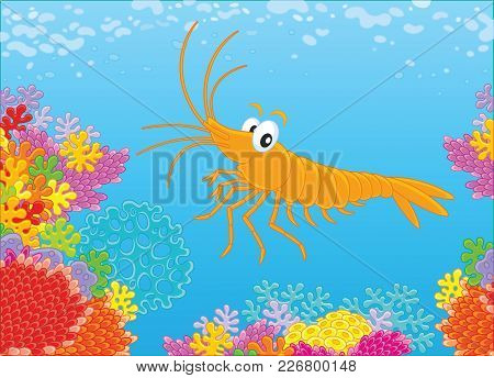 Funny Shrimp Swimming On A Colorful Coral Reef In A Tropical Sea, A Vector Illustration In Cartoon S