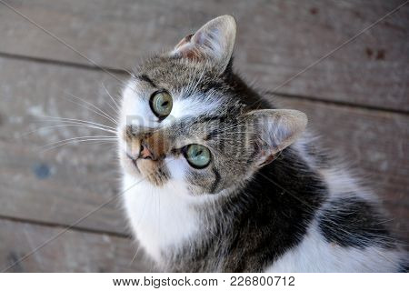Friendly Cat With Big Eyes Is Not Affraid Of People.