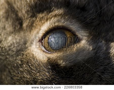 A Macro Photo Of The Clouded Eye Of A Dead Rabbit In The Arizona Desert. The Rabbit Was Undamaged, W
